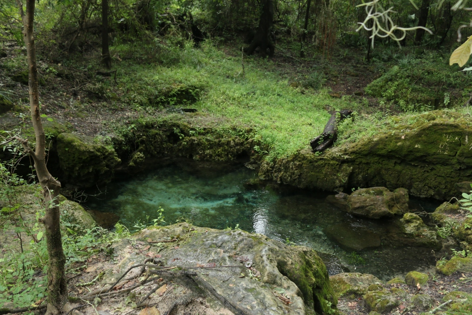 florida spring, nature, landscape