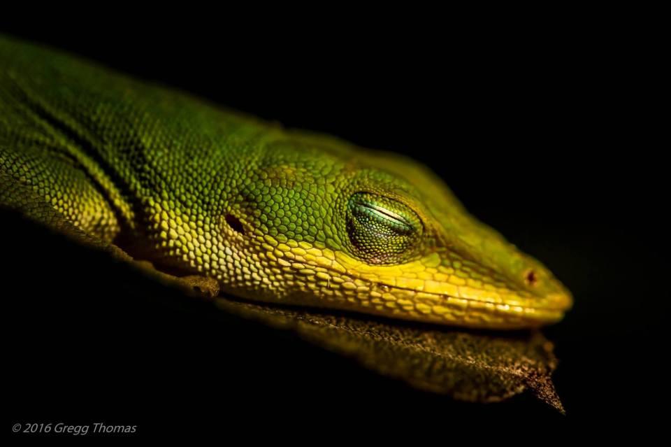 lizard, nature, landscape