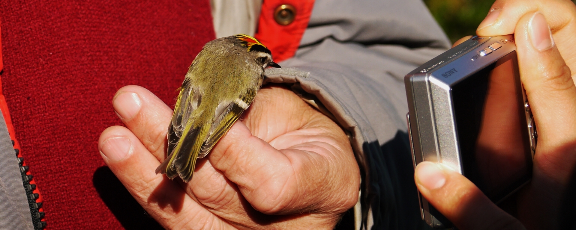 bird banding, nature, landscape, north carolina