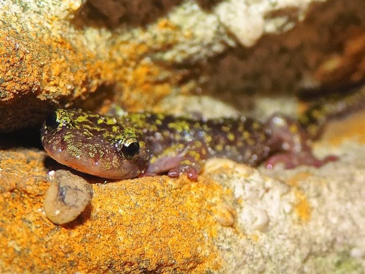 green salamander, nature, landscape