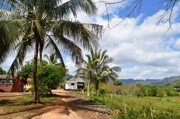 cuba, nature, landscape, travel