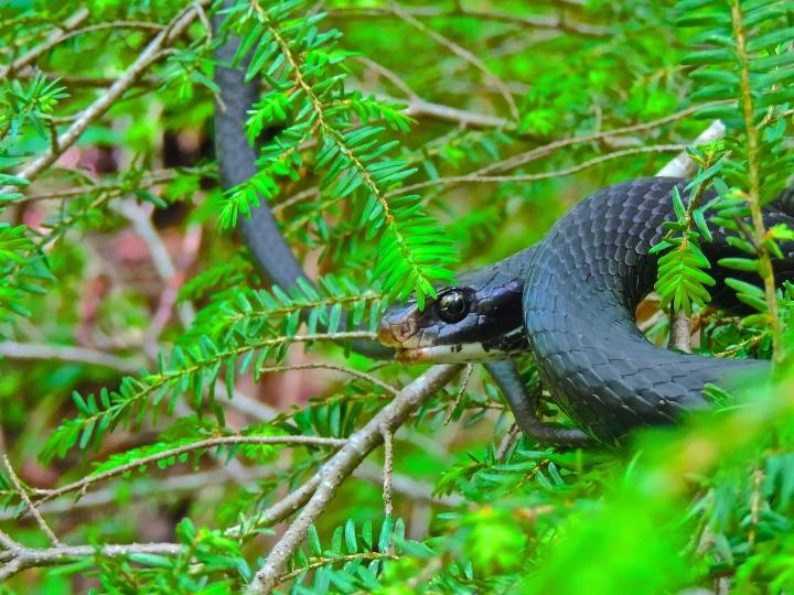 nature, snake, wildlife