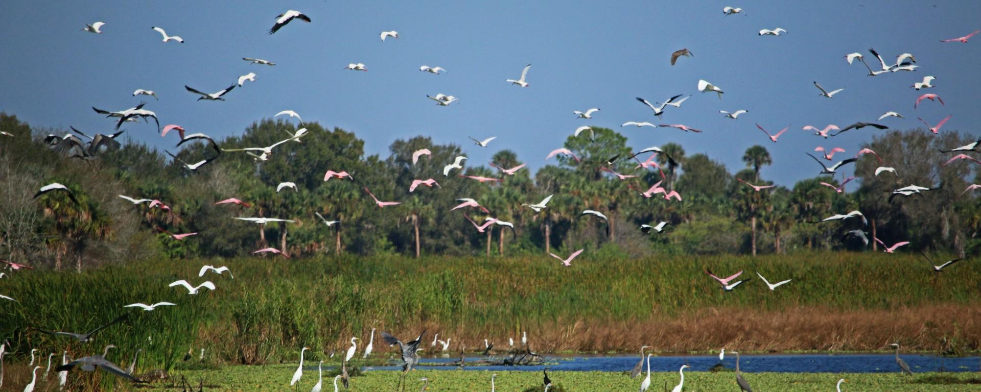 nature, florida, everglades, travel