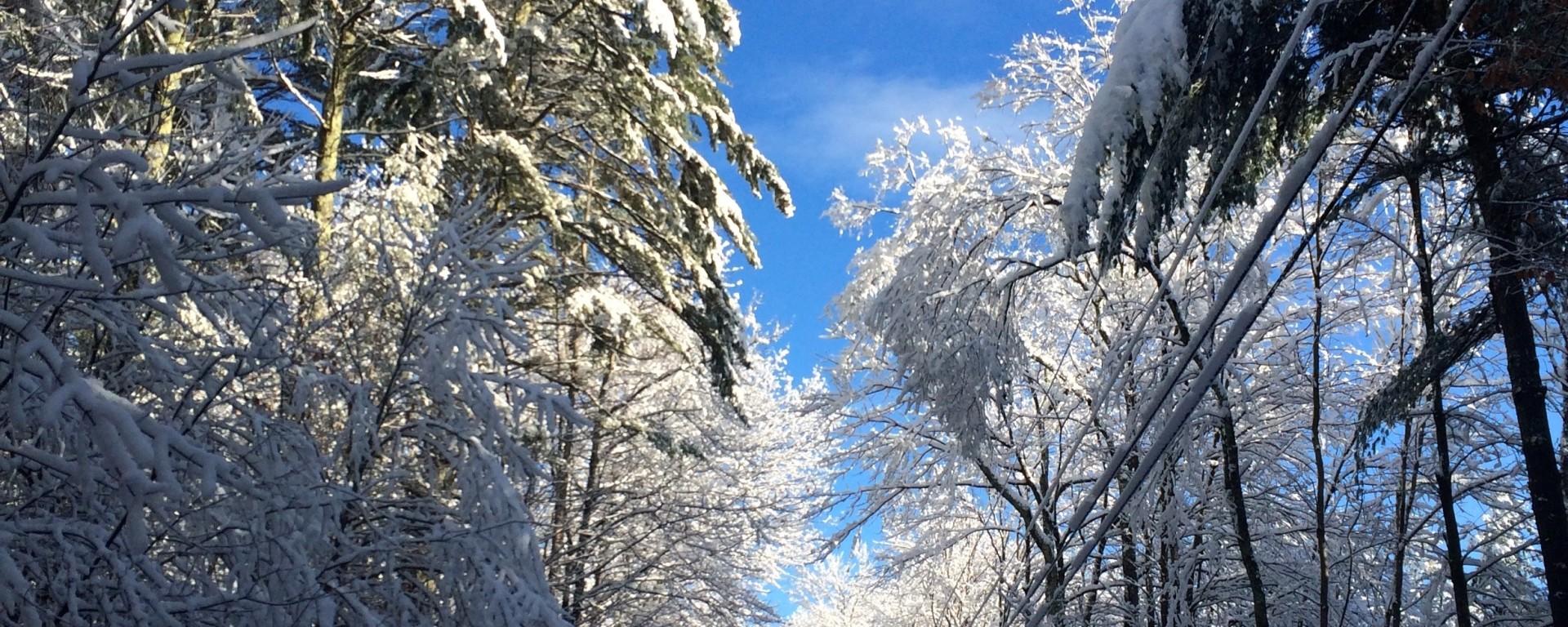 winter, nature, travel, thanksgiving