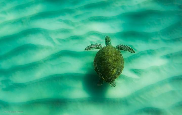 nature, wildlife, landscape, turtle
