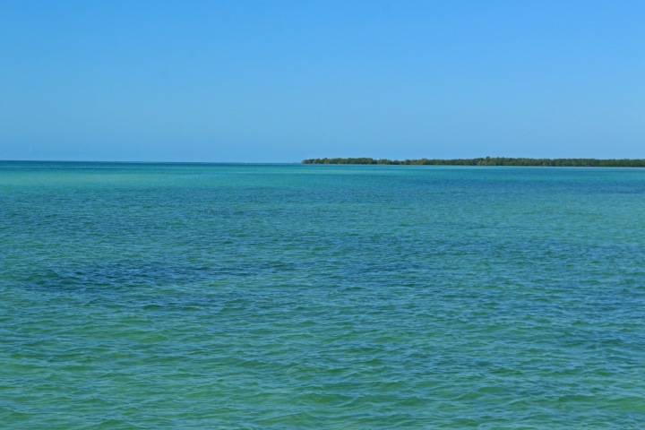key west, nature, landscape