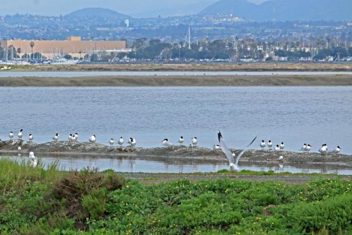 san diego, nature, landscape, california