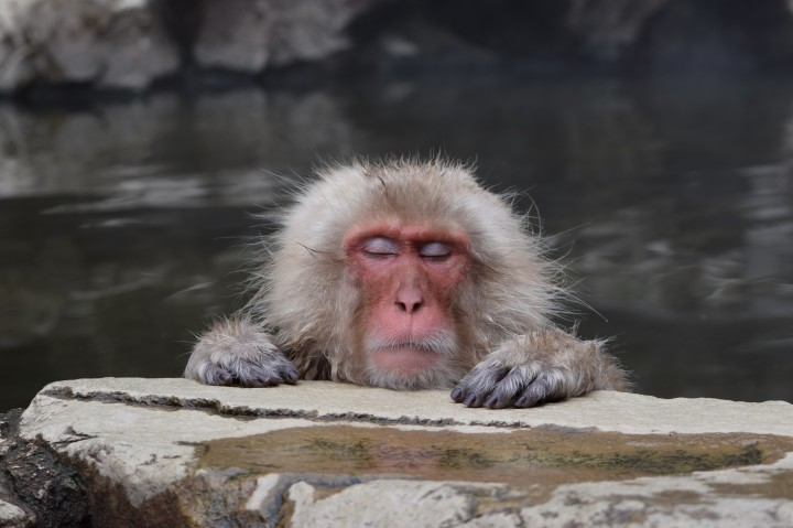 monkey, japan, travel