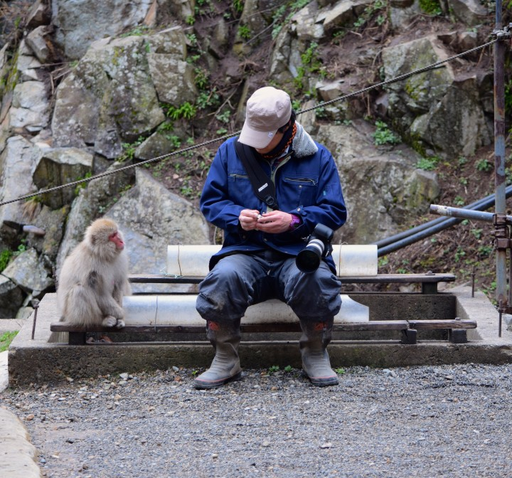 monkey, nature, travel