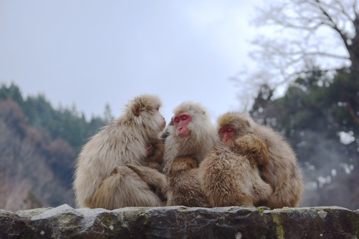 monkeys, travel, nature