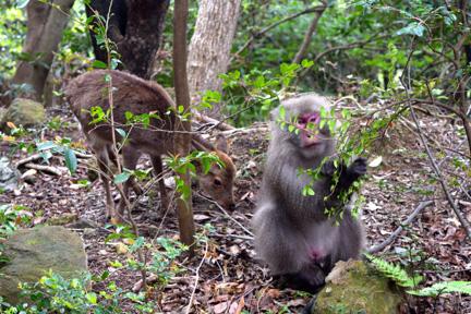 monkey, travel, nature