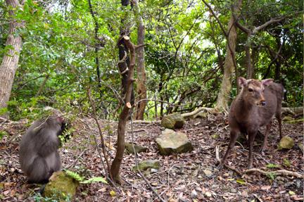 deer, travel, nature